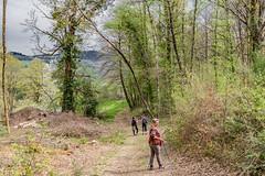 31-Descente en pente douce (Alain COSTE) Tags: 2019 forêt hautevienne lavarache limousin nikon ocb printemps randonnée eymoutiers france