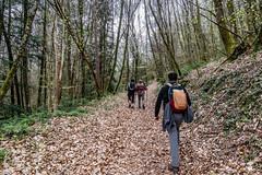 41-Printemps débutant (Alain COSTE) Tags: 2019 forêt hautevienne lavarache limousin nikon ocb printemps randonnée eymoutiers france