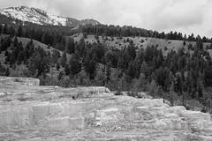 Minerva Terrace - Yellowstone (petechar) Tags: charlesrpeterson petechar landformlandscape geothermalfeature minervaterrace mammothhotsprings yellowstonenationalpark monochrome backandwhite wyoming panasonicg9 leica1260mm tripod