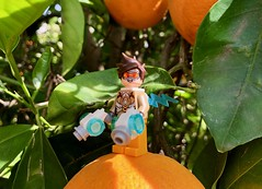 Tracer (socalbricks) Tags: tracer overwatch lego figure tree yard outside orange fruit green plants mini minifigure 2019 pistols gun action peace legooverwatch ow time 2016 outdoor miniature photography toy legophotography