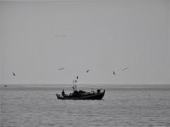 Waiting for leftovers. (Ia Löfquist) Tags: crete kreta fiskebåt fishingboat sjöfågel mås trut seagull gull sea hav monochrome svartvitt fs190519 rester leftovers fotosondag fotosöndag