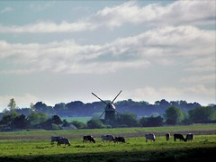 Mautby Mill, Norfolk (flicky@flickr) Tags: mautbymill norfolk windpump windmill drainage tower mill