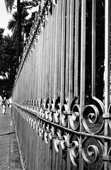 img214-Editar (Buenos Aires loucoporanalogicas) Tags: seagull 205 cinerex pb 50 rebobinado praça da liberdade bh