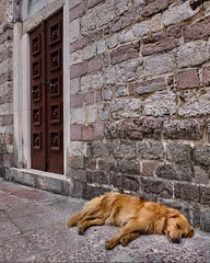Time for a nap (Vest der ute) Tags: xt20 city dog wall stones door fav25