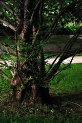 7 - Vitry-sur-Seine - Jardin Michel Germa - Résurgences... (melina1965) Tags: îledefrance valdemarne vitrysurseine macval muséedartcontemporainduvaldemarne musée musées museum museums mai may 2019 nikon d80 jardin jardins garden gardens printemps spring arbre arbres tree trees