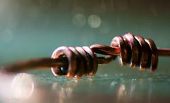 Copper twist (Elisafox22) Tags: elisafox22 sony ilca77m2 100mmf28 macro macrolens telemacro lens hmm macromondays copper bracelet curved twist shapes light texture curled mixpixbox textures bokeh stilllife indoors sunshine elisaliddell©2019