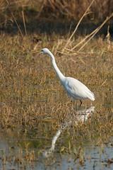 Reflect (NA.dir) Tags: keoladeo national park bharatpur india bird sanctuary birds migratory sony rx103 rx10mk3 rx10m3