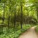 Floresta de Klinteskoven