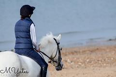 MYates_Photography-68-2 (MYates_Photography) Tags: nikon d5300 horse equine photography hayling island beach sand sea stone