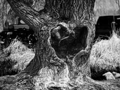 Empty Heart DSN_2406HSS (iloleo) Tags: tree hss ontario bw nikond7000