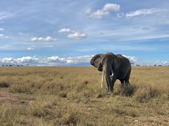 (晒晒太阳不长虫) Tags: tanzania serengeti elephant safari
