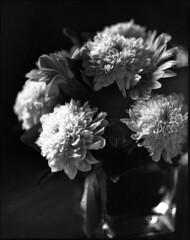 img598XL (Jurgen Estanislao) Tags: flowers still life black white monochrome vintage film photograph asahi pentax 6x7 smc macrotakumar 135mm f4 ilford hp5 plus kodak hc110 g jurgen estanislao