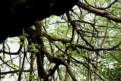 DSC_0051mod (pedrop61) Tags: boschi alberi primavera