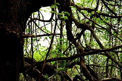 DSC_0050mod2 (pedrop61) Tags: boschi alberi primavera