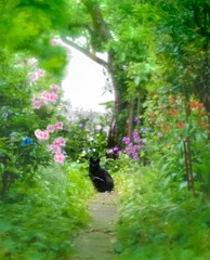 Cat in the green path (Tomo M) Tags: cat blackcat flower plant tree arrowsm03 mobile