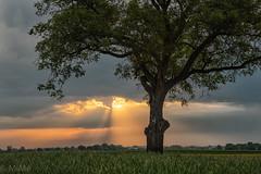 Lichtstimmung in der Vorderpfalz (Pfalzknipser) Tags: gäu landschaft lichtstimmung sonnenaufgang