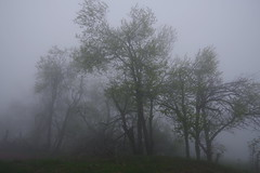 a foggy day in may in the Black Forest (3) (mgheiss) Tags: schwarzwald blackforest nebel fog pentaxkp may mai