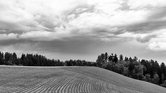 Storm is coming up (Role Bigler) Tags: 35mm 50mp bw canon canoneos5dsr ef35mm12isusm ef35mm20usmis emmental natur schwarzweiss schweiz suisse switzerland blackwhite blackandwhite clouds fullformat grassland heyfield lawn lines meadow monochrome nature primelens sky trees