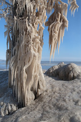 Winter's Grip (peterkelly) Tags: digital canon 6d northamerica wheatley ontario canada beach lakeerie blue sky ice tree shore icicle