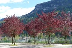 Hike around Lac de Nantua (*_*) Tags: marche walk randonnee nature montagne mountain hiking 2019 printemps spring may nantua ain france europe jura city