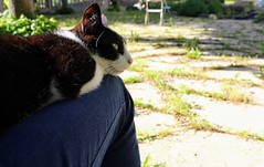 gentil chat (alyna16) Tags: cat chat animal nature outside sleep love cute