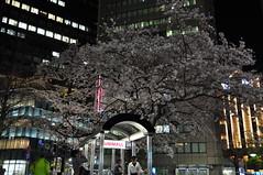 cherryb19513 (tanayan) Tags: cherry blossoms sakura flower night view nikon d90 aichi japan 桜 さくら 愛知 日本 nagoya 名古屋 meieki 名駅 town urban cityscape