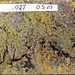 Polymetallic massive sulfide (Middle Tholeiitic Unit, Kidd-Munro Assemblage, Neoarchean, 2.711 to 2.719 Ga; drill core at the Potter Mine, east of Timmins, Ontario, Canada) 38