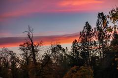 Afternoon Ending (davidseibold) Tags: america california cloud jfflickr photosbydavid plant postedonflickr postedonmewe redding shastacounty sky sunset tree unitedstates usa