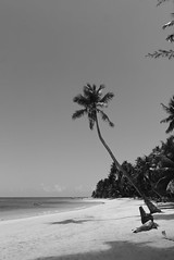 Palmera destacada (ben.bourdon) Tags: las galeras república dominicana samaná playa beach caribe arena blanca naturaleza natural palmeras vegetación