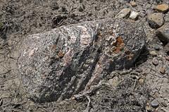 Eagle Butte Trail, Grasslands - DSC_3503a (Markus Derrer) Tags: eaglebutte hikingtrail saskatchewan markusderrer may grasslandsnationalpark grasslands butte rock lichen