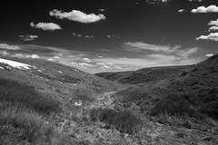 Timbergulch Trail, Grasslands - DSC_3513bw (Markus Derrer) Tags: timbergulch markusderrer grasslandsnationalpark grasslands saskatchewan may ravine gully blackandwhite monochrome
