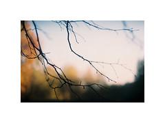 (kotmariusz) Tags: branch bokeh nature tree colors fujicolor exa1b helios 442 film photography poland 35mm analog fujifilm filmisnotdead