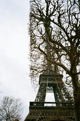 (kelcey a.f.) Tags: contax t2 paris france eiffel tower nature tree kodak portra 800 35mm film
