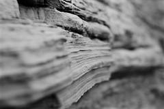 Staithes, September 2018 (radfordsam0) Tags: black white mono monochrome film fuji fujifilm neopan acros 100 nikon f301 50mm plustek 8200i stone beach cliff bokeh autumn september staithes yorkshire coast 35mm