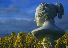 Evening sunlight (modest photo maker) Tags: büste klassizismus gesichts profil wolken gelb weis blau bust classicism face profile clouds yellow white blue