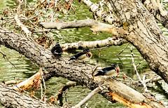 Bird Sanctuary (Feng Sheng) Tags: bird sanctuary
