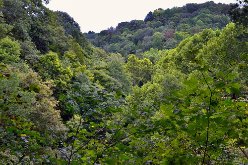 Kentucky Hillsides Endowed with a Forest of Greens and Yellows (Mammoth Cave National Park)