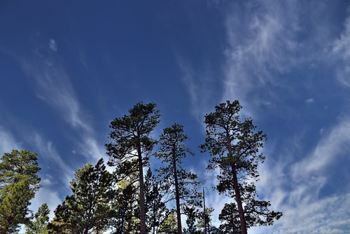 Clouds and Wisps with Blue Skies Above Some Nearby Trees (Devils Tower National Monument)