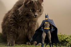 Batman vs. Sora (catandtonic) Tags: batman actionfigure animal calgary cat pet sora toy