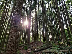 The sun about to set behind the trees (walneylad) Tags: northvancouver britishcolumbia canada park parkland urbanpark woods woodland forest rainforest urbanforest trees stump log ferns nature view scenery may spring sun bluesky light shadow sunset princesspark bark green brown