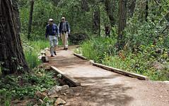 Coming Around (LeftCoastKenny) Tags: pointlobosreserve hikers trees brush grass bridges trail path rock
