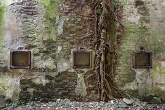 Angkor (Lo.Re.79) Tags: abandoned collapse decay exploration flik forgotten industry italy nature roof rotten rottenplaces tree urban