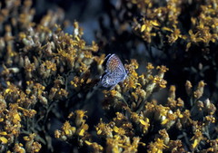 WTexasDesertbloomes (michaelmaguire4) Tags: butterfly flowers