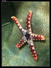 Baie des Citrons 19.05.2019 (CurLy98800) Tags: noumea baie des citrons nouvelle caledonie new caledonia snorkeling diving plonge plage lagon poisson pacific sous marine underwater etoile de mer