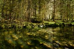 L'Héria vert sous le puits blanc (leon.vaillat) Tags: jura reflet ruisseau eau arbre mousse montagne ombre magique lumiere