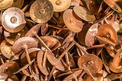 copper (alderson.yvonne) Tags: macromonday copper 29 rivets roofing