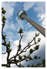 Düsseldorf Rheinturm (A_und_O) Tags: düsseldorf rheinturm himmel sky bluesky clouds wolken bäume blätter turm tower nikon nikond600 28mm