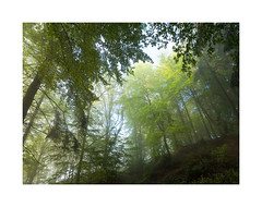 Mai Wald (ej foto) Tags: maiwald ejfotografik mettlach germany new trail landscape panorama nature trees green light sun fog clouds autumn sky photography olympus omd mft microfourthird flickr flickriver most interesting explore