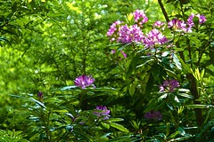 Flower shot 2. (tony allan tony allan) Tags: soligor55mmcdlens woods trees forest flower hastings m42 manualfocus legacyglass vintageglass
