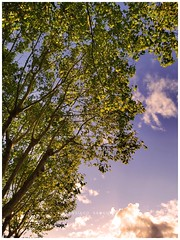 Cielo... (Santiago Sánchez López) Tags: cielo verde azul nubes natural naturaleza aire luz sol atardecer